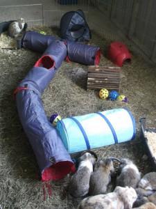 konijnenhuis2