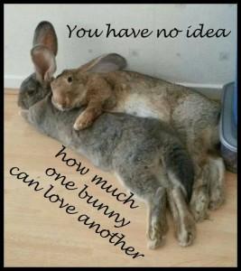 konijnenliefde