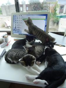 computer kittens
