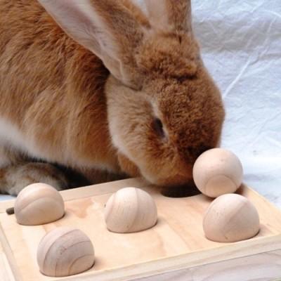 waar zitten konijnen