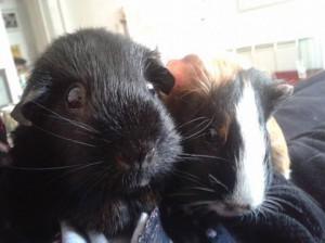 Coco en Roosje