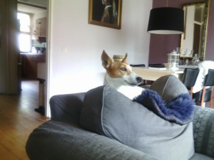 Rocco4