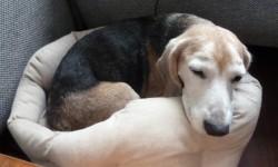 beagle james