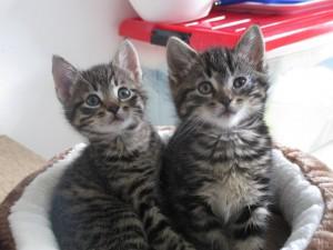 2 kittens3