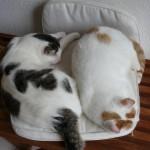 katten samen