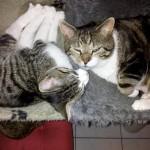 katten samen2