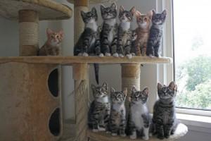 kittens nooit alleen