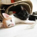kittens samen