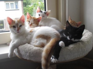 kittens samen3