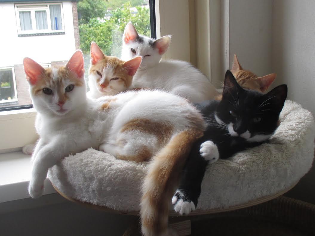 Waarom wij uitsluitend kittens plaatsen bij een andere jonge kat ...