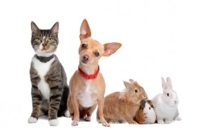 hond-kat-konijn-knaagdier