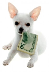 White Chihuahua Puppy Holding a Fifty Dollar Bill in Mouth, on white background.