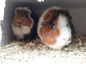 Elvis en Corrie