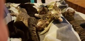 Kittens samen (1)