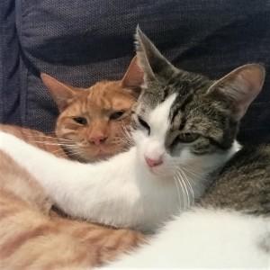 Tonie en Teddie-1