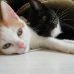 2 kittens4