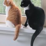 2 kittens6
