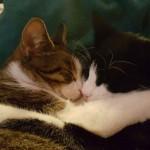 katten samen4