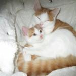 kittens samen2