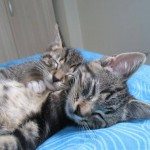 kittens samen4